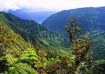 East Moloka'i Conservation Area